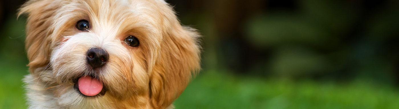 Pet Stores Independence, MO, Pet Supplies, Buy Puppies Independence
