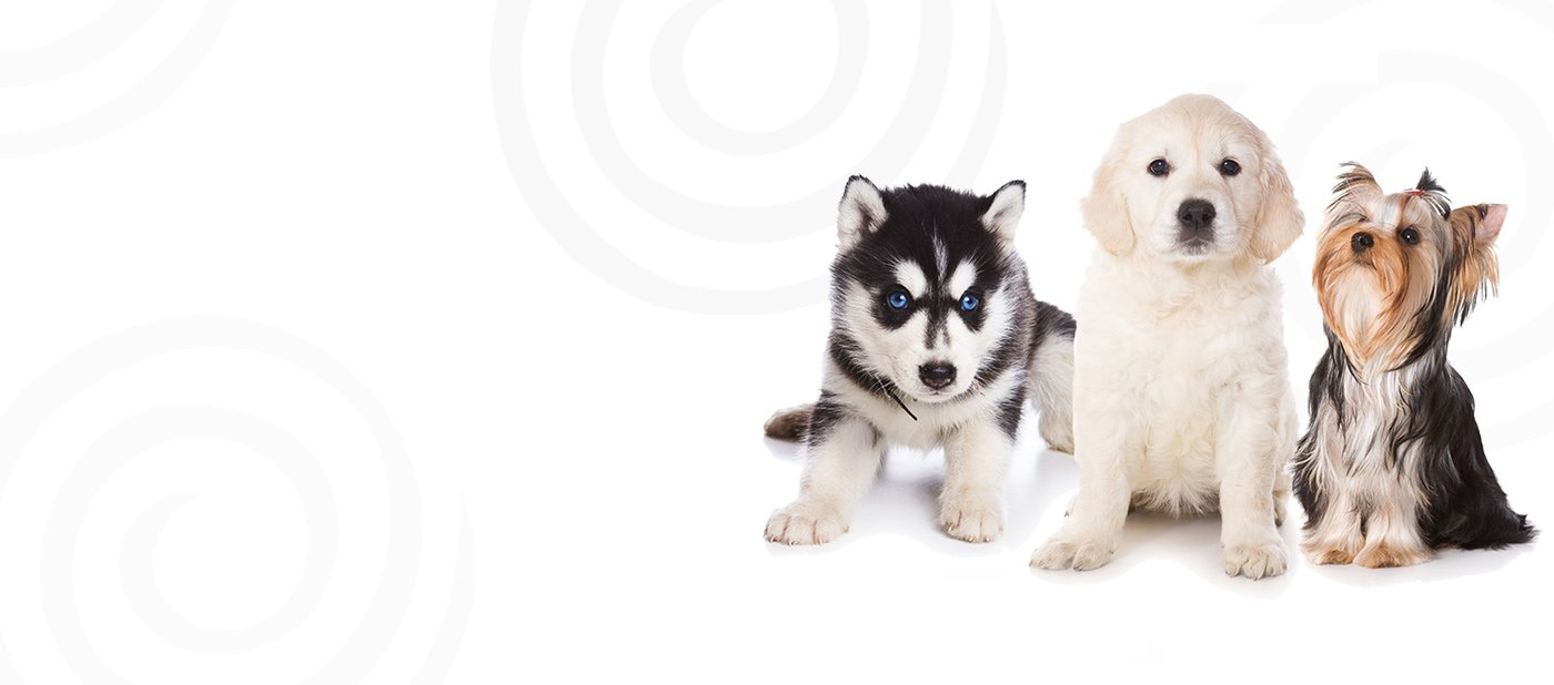 Buy Puppies Supplies Petland Independence Missouri